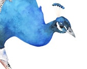 Peacock archival print of watercolour painting A3 size largest print - P3815 wall art print - bird art print