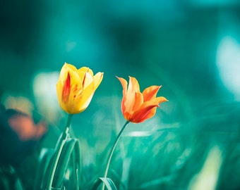 """Teal Photography, Orange Teal Flower Photo, Turquoise Photography, Aqua Teal Picture, Turquoise Floral Art, Yellow Nature, """"Taken by Teal"""""""