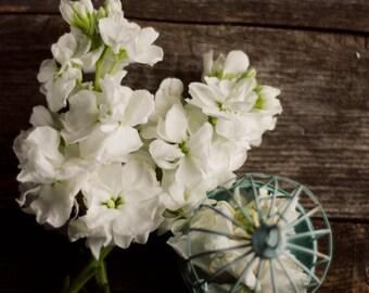 farmhouse decor, white flower art, birdcage photograph, rustic flower art, floral still life, romantic floral print, floral nursery decor