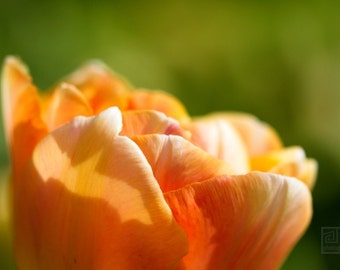 Orange tulips, Nature photography, Dreamy tulip photo, Flower print, Tulip macro, Green and Orange, Spring Impressions, Romantic home décor