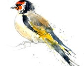 Goldfinch II Original Watercolour Illustration