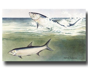 "Deep Sea Fishing, 1930s Fish Art, Vintage Ocean Room Decor --- ""Tarpon Silver King"" No. 202"