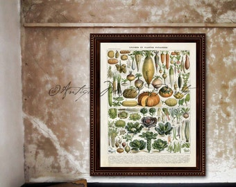 French Botanical Vegetables Artichoke Pumpkin Carrot Cabbage Super Large Poster Print On Photo Paper 8x10 to 30x40