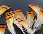 Orange Pheasant Feathers Tippets Small Feathers Craft Supplies Earring Embellishments Jewelry Supply Qty12