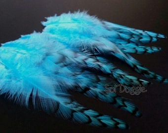 Turquoise Feathers for Crafts or Hair Accessories, Grizzly Feathers Teal Aqua Feathers - 12