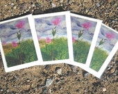 Five Queen of the Prairie & Five Peony Note Cards for Laura
