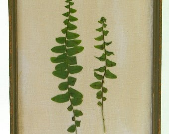 "Pair of Ferns 7"" x 9"" - Vintage Inspired Botanical, Pressed Flower Botanical, Fern Botanical, Framed Floral Artwork 1"
