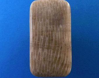 Devonian age fossilized coral cabochon