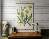 Vintage Dandelion Pull Down Botanical Chart Reproduction with Canvas Print and Oak Wood and Brass Hanger