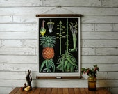 Vintage Pineapple Pull Down Botanical Chart Reproduction with Canvas Print and Oak Wood and Brass Hanger