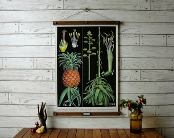 Pineapple Botanical Chart / Vintage Reproduction / Canvas Fabric or Paper Print / Oak Wood Hanger with Brass Hardware / Organic Wood Finish