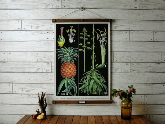 Pineapple Botanical Chart /Vintage Reproduction /Canvas or Paper Print /Oak Wood Hanger with Brass Hardware /Organic Milk Paint & Wax Finish