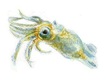 Watercolor Baby Squid, Baby Squid Print
