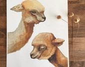 Alpaca Painting - Watercolor Art - Archival Print - Kin by Marisa Redondo