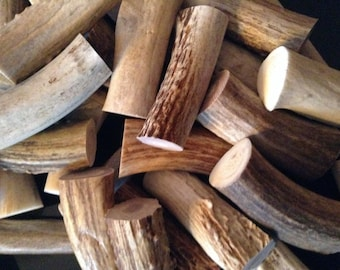 Deer Antler cut to 2 1/2 inches, for pen stock, antler pens, cabinet pulls, carving stock, very solid
