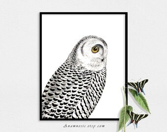 SNOWY OWL Art Print - Instant Download - printable antique bird illustration for framing, totes, nursery, clothes, pillows, cards, tags etc.