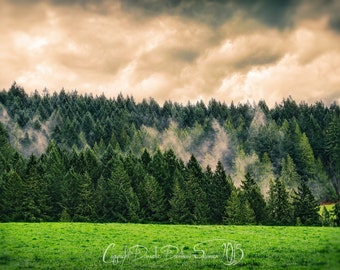 Landscape Photography | Pine Tree Forest | Misty Fog | Springtime | Bright Colors | Oregon | Conifers | Pink