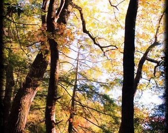 Autumn trees Unwinding & intertwining among orange yellow green fall leaves, afternoon sunlight, bright wall art, warm office decor