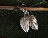 Greek Oregano Earrings cast in sterling silver from real oregano leaves