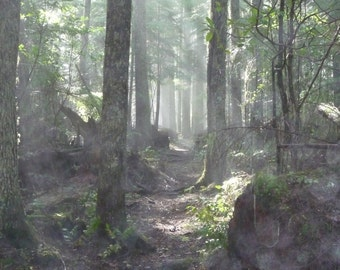 Sun Rays Filtering Through The Forest  , Digital Download, trail decor, forest -Fine Art Photography -Trees-Forest Trail-Wild Rhodendroms