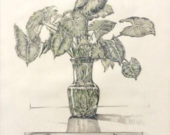 Still life - plant in vase.