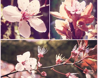 Antique Pink Blossoms, Floral, Fine Art Photography, Wall Decor, THREE MULTI SET
