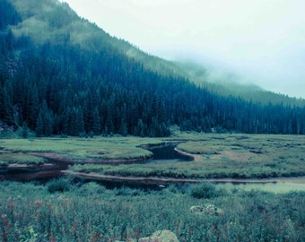 Into the Mist, Landscape Photography, Colorado Photography, Fog, Misty Weather, Mountain Photography, Stream, Nature Photography