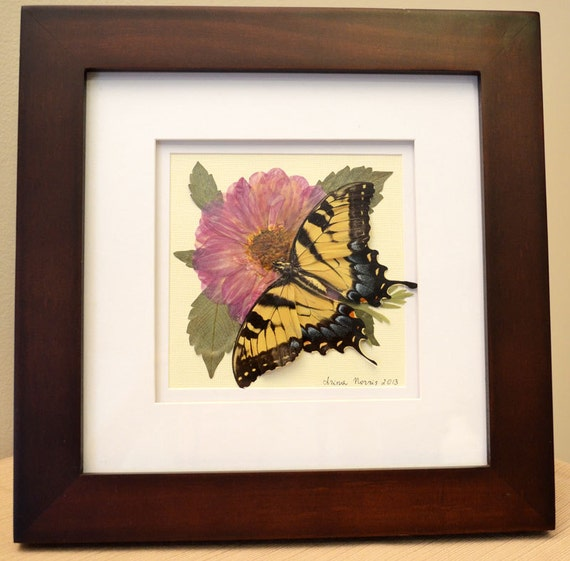Original Pressed Flower Art Real Butterfly Framed Botanical