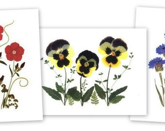 Set of 6 Pressed Flower Notecards - Pansies, Phlox and Bachelor Buttons