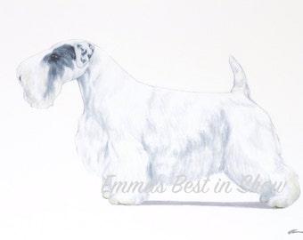 Sealyham Terrier Dog - Archival Fine Art Print - AKC Best in Show Champion - Breed Standard - Terrier Group - Original Art Print