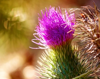 Thistle Wildflower Print, Purple Pantone Wildflower Photo, Flower Photography, Wildflowers Wall Art, portrait wildflowers Landscape