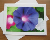 Photo Greeting Card, Morning Glories, Pink. Blue, White ,MG8,Floral Cards, Photo Notecards, Nature Art, Happy Birthday Card, Get Well Card