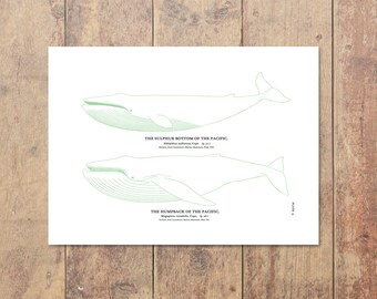 Whale Art in Green-Fishing Art Nautical Decor Beach Decor Fish Print Ocean Wall Decor Gifts For Dad Ocean Home Decor Boys Room Decor