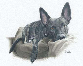 Portrait Print of Dutch Shepherd Mix