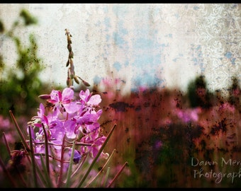 Fine Art Flower Photography, Fireweed Wildflowers Unframed Photographic Wall Prints, FREE SHIPPING