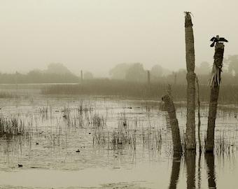 Misty Marshes Wetland Photography, Blue dominated Dreamy Florida photo