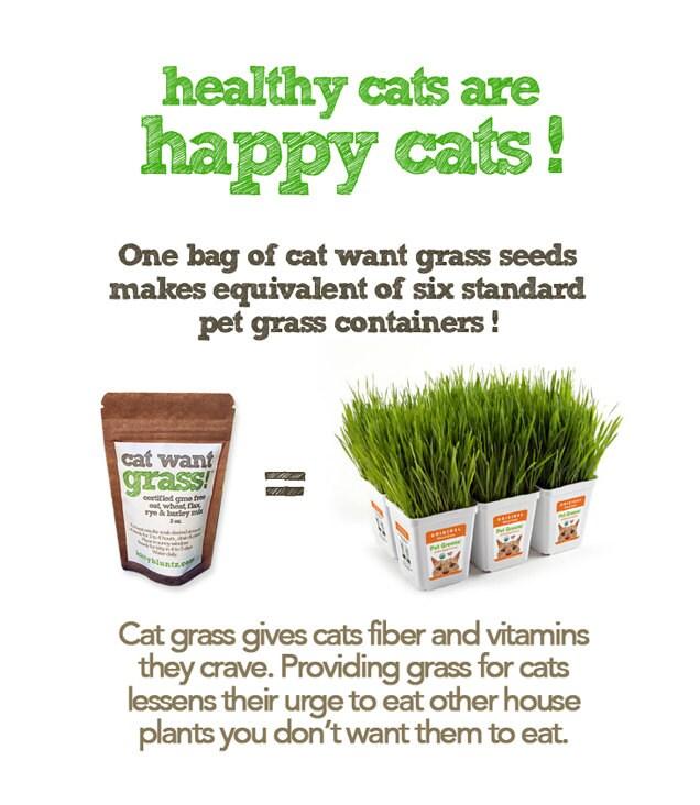kittybluntz chat voulez herbe herbe 5 m lange de graines. Black Bedroom Furniture Sets. Home Design Ideas