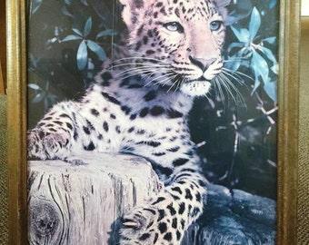 Original Photography Print-Tiger in Color