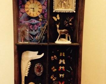 Curiosity Cabinet Memento