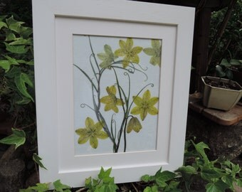 Fritillaria framed pressed flowers