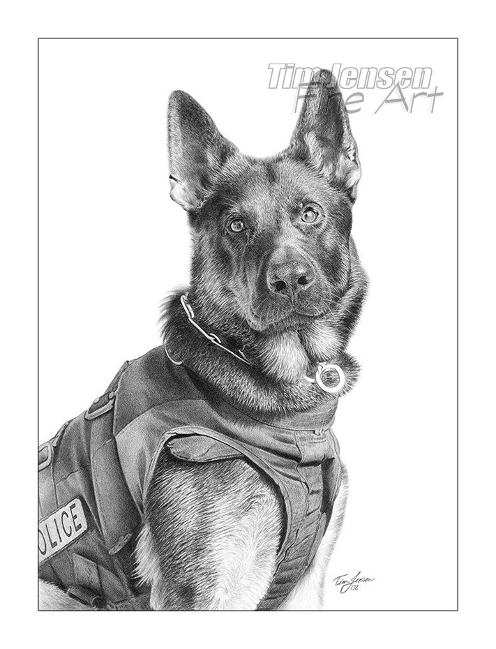 German Shepherd police dog ready for action. Print of a