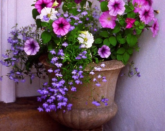 Pink + Purple Flower Pot Fine Art Photography Wall Photo Print, Potted  Flowers Lavender Red