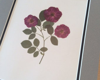 Pressed Flower Art Print- Three Miniature Roses