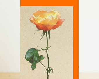 Orange rose blank flower card with orange envelope, A7/A6 card, eco friendly photographic print, recycled card, recycled envelope