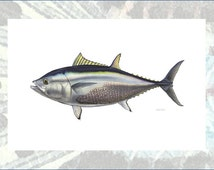 Bluefin Tuna Masterworks Limited Edition Print On Canvas by Flick Ford, natural history art, tuna painting, FREE SHIPPING!