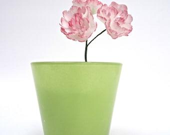 Sugar Carnation