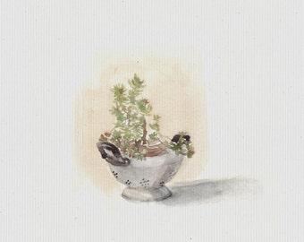 Vintage Colander and Flowers Watercolors Fine Art Print