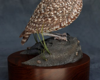 Burrowing Owl, bird, wood, carving, handmade