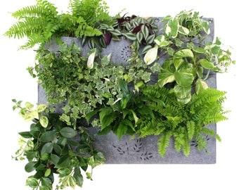 Vertical Garden > 70 x 75 cm (27.56 x 29.53 in) > indoor planter > wall planter > waterproof/watertight > apartment garden > indoor garden