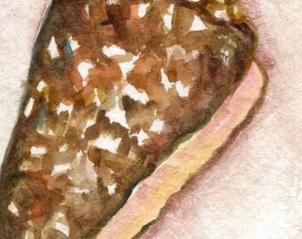 ACEO Cone Sea shell watercolor painting, beach, shell painting, miniature watercoolor, seashell painting art cards, original ocean art